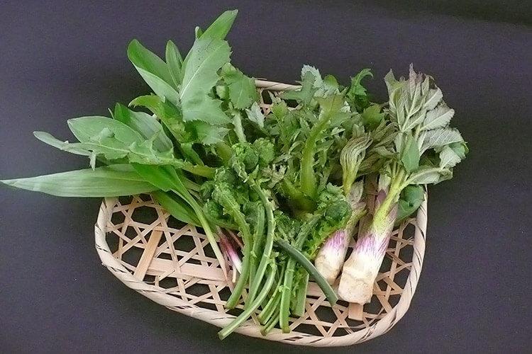 Sansai Mountain Vegetables