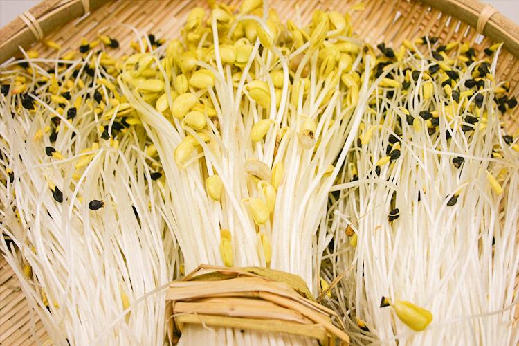 Owani Onsen Bean Sprouts