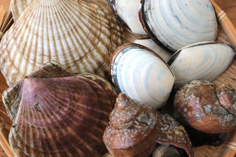 Shellfish, Seaweed