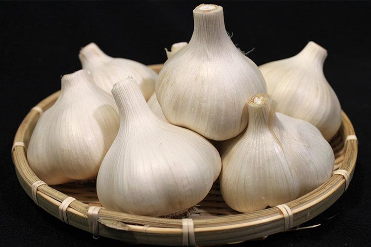 Takko Garlic