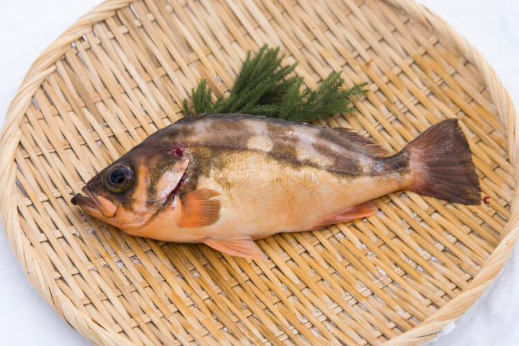 Cape Tappi Gold Rockfish