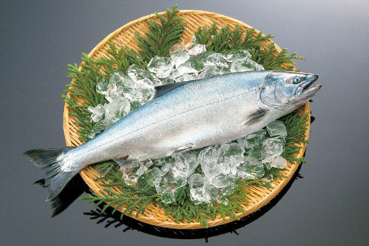 Masu (Sea Trout)