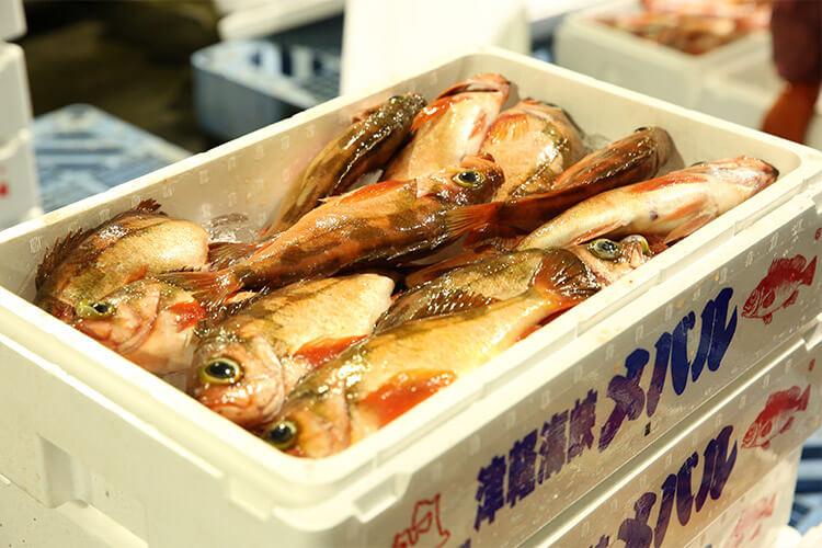 Tsugaru Strait Goldeye Rockfish