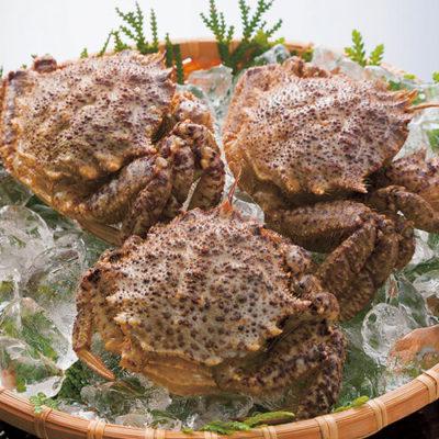 Helmet Crab