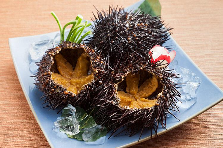 Northern sea urchin