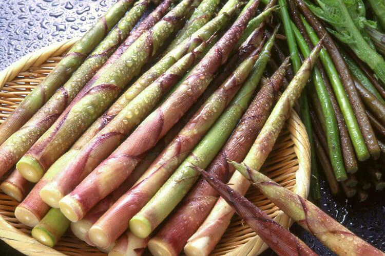 Nemagari Bamboo