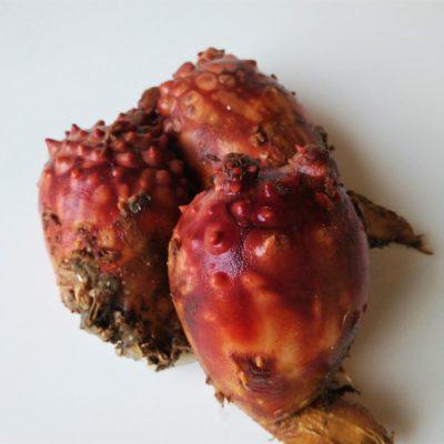 """Sea Pineapple """"Hoya"""" – A Summer Delicacy"""